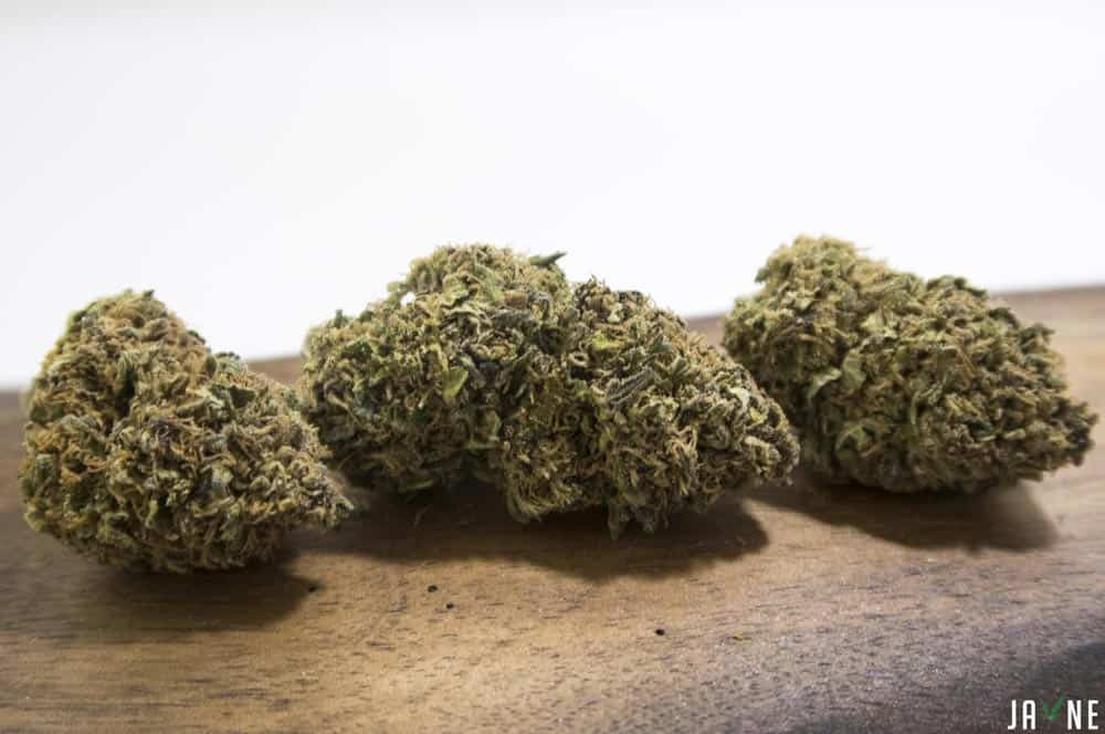 Mendocino Purple cannabis cultivar by Pilot Farm