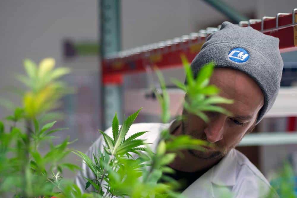 Cascade High cannabis farm